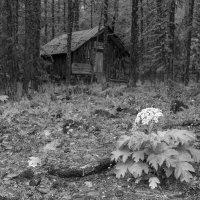 Домик Тронова в нижнем альплагере Актру :: Валерий Михмель
