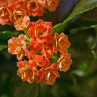 цветок :: Николай Семин