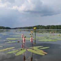 Летнее озеро :: Елена