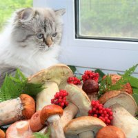Любопытство-не порок.. :: Ольга Митрофанова