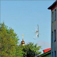 Ангел над городом... :: Кай-8 (Ярослав) Забелин