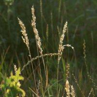 Летняя ботаника :: Syntaxist (Светлана)