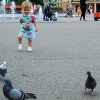 Голубки, ко мне  бегите !  Я вас  приголублю!)) :: Евгений БРИГ и невич