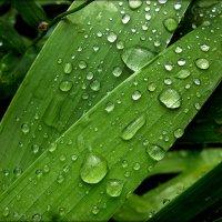 После дождя. :: Александр Шимохин