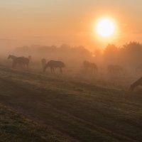 Выгул на восходе. :: Виктор Евстратов