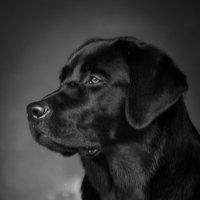 Пёс :: Андрей Соловьёв