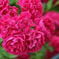 """""""Розовый Вальс"""" :: Татьянка ***"""