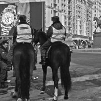 Про московских лошадей. :: Борис Бутцев
