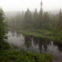 Туман над лесом. :: Галина Полина