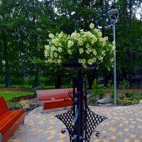 Городские цветы. Петунья. :: Наталья Цыганова