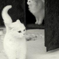 Зима...и кошки торжествуя сегодня обновляют путь :: Елена Минина