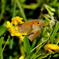 опять про бабочек 6 :: Александр Прокудин