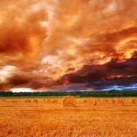 Поджигает закат небо хмурое Рыжим цветом поля заливает... :: Анатолий Клепешнёв