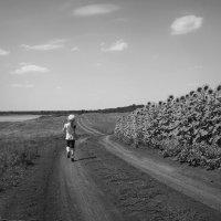 Июльский полдень... :: Serdechko (Лариса) Кальнина