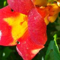 Ал   так свет  цветка :: Евгений БРИГ и невич