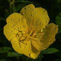После дождя :: Светлана Карнаух