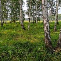 Русский лес :: Владимир Зыбин