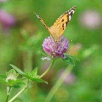 Бабочка :: Эдуард Куклин