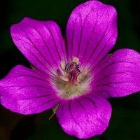 Цветок :: Александр Протопопов