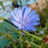 Цветок :: Наталья Красильникова