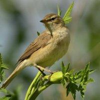Птичка :: Солоненко Лидия