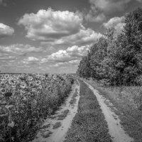 Деревенская дорога и подсолнухи ......... :: Александр Селезнев
