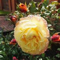 То дождь, то солнце, цветам для роста. :: Татьяна Помогалова