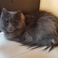 жил да был черный кот........ :: Владимир