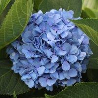 цветы :: Лина