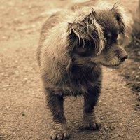 Пёсик :: Serdechko (Лариса) Кальнина