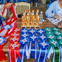 Награды на конкурс ахалтекинских лошадей :: Николай Николенко