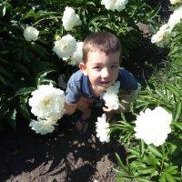 ...во саду ли,в огороде :: марина ковшова