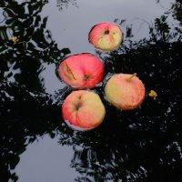 Свои яблочки :: Вадим