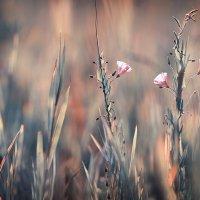 нежность лета :: Эльмира Суворова