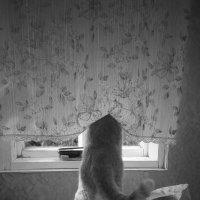 мыши под наблюдением (фото Н.Макельской) :: Павел Самарович