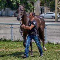Ахалтекинская лошадь :: Николай Николенко