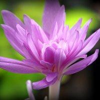необычный цветок :: Олег Лукьянов