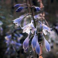 Синий цвет.... :: Николай Меньщиков