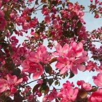 Нарва. Весна. Цветущее дерео :: Julia Nikolina