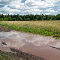 И всё идут, идут дожди грибные.. :: Андрей Заломленков