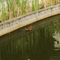 И в бассейне можно плавать. :: sav-al-v Савченко