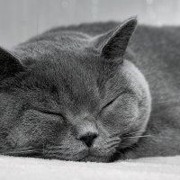Спят усталые игрушки :: Виталий Нимецков