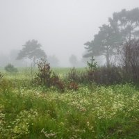 туманы в Сибири :: Дарья Молчанова