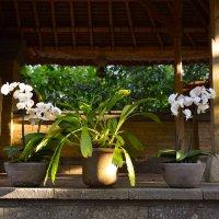 цветы :: Ноэми Гольдберг