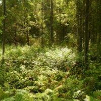 лес :: веселов михаил