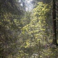 лес4 :: веселов михаил