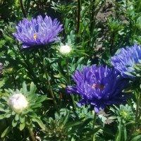 Уже осенние цветы пришли на смену летним... :: Зоя Чария