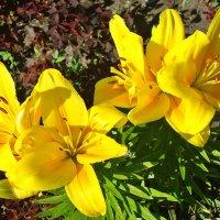 Дурманящий запах лилий :: Лидия (naum.lidiya)
