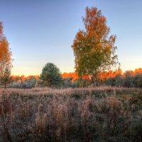 Золотая осень :: Cергей Кочнев