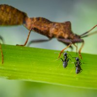 Вот, смотри, Маша и забудь, чему тебя учат в муравейнике!.. :: Владимир Шамота